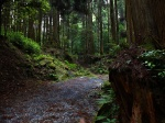 The mysterious forests of Kirishima