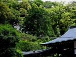 Suwa Shrine - forest on the mountain slope