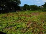Remains of Takashima Residence